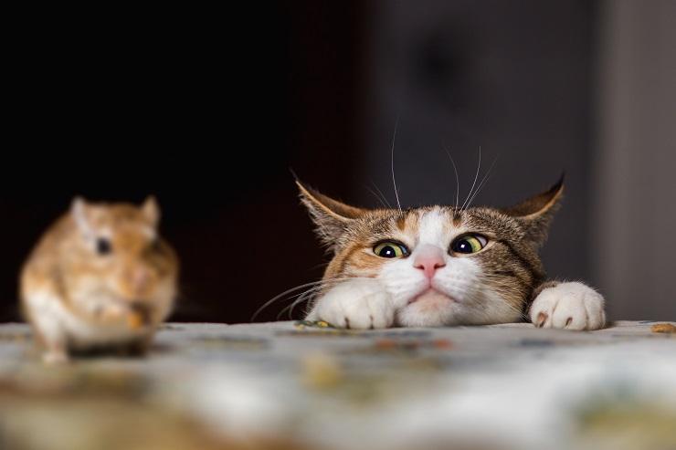 ネズミをにらむ猫