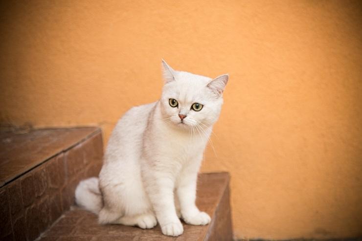 階段で座っている猫