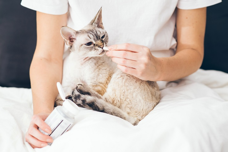 薬を飲ませてもらう猫