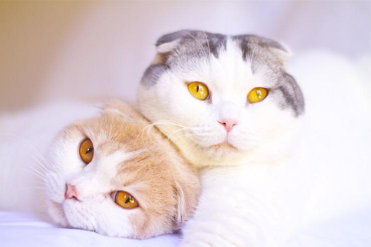 くっつく2頭の猫