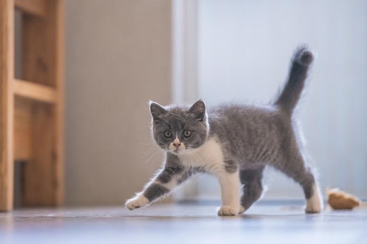 ヨコ歩きをしている猫