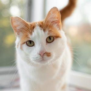 正面を見る猫