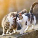 仲良く頭をぶつけあう猫