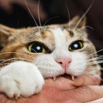 猫が噛む理由とは? 効果的なしつけは?