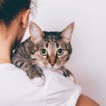 人気の猫種ランキングTOP20! 種類ごとの特徴や性格、魅力をご紹介