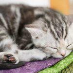 眠る子猫の画像