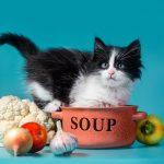 猫に玉ねぎを与えてはいけない!食べてしまったときの対処法は?