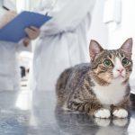 診察台に乗る猫