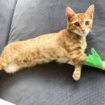 前足をケガした猫