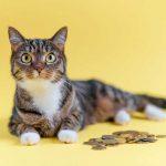 猫のペット保険は必要?知っておきたい猫の保険のこと