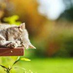 猫の平均寿命は何歳?寿命の長い種類、短い種類は?ギネス記録は?