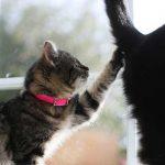 他の猫のしっぽに手をかける子猫
