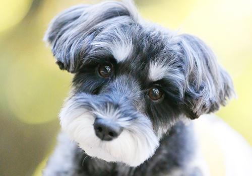 愛犬 名前 ランキング