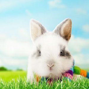 子ウサギの画像