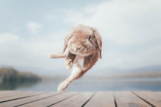 走るうさぎの画像