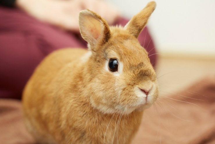 アニコム社員と暮らすウサギの画像