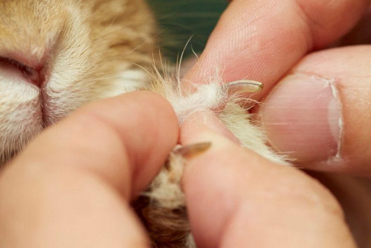 うさぎの爪