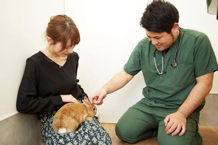 病院の先生とうさぎと飼い主