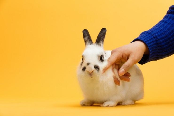子ウサギを撫でている画像