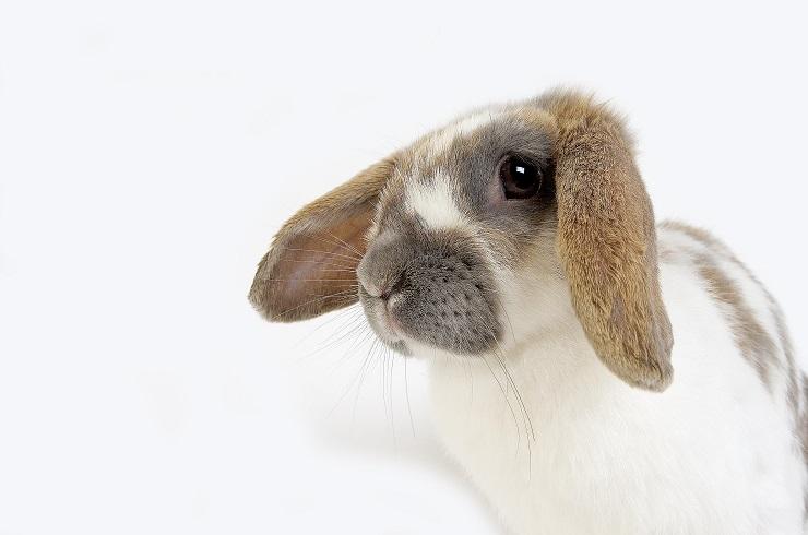 耳が特徴的なうさぎ