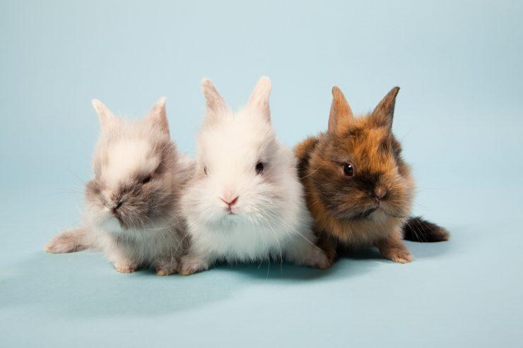 三匹の子ウサギ