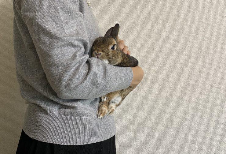 うさぎが人に抱っこされている写真
