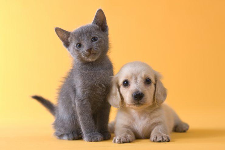 子猫と子犬が写ってる画像