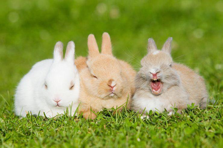 子ウサギの写真